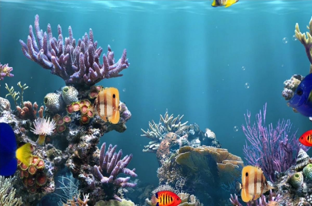 underwater - sealife